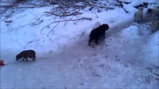 Собаки Бездомные щенки 1 января 2015 г