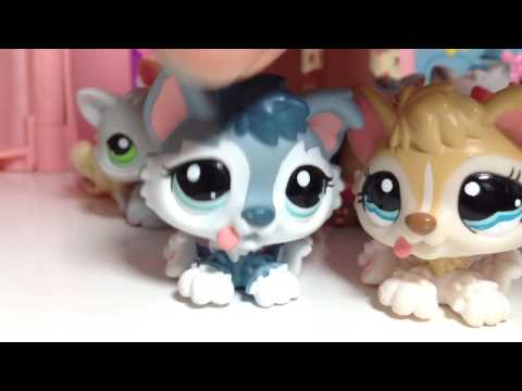 LPS || All of My Kittens and Puppies // LPS Collection