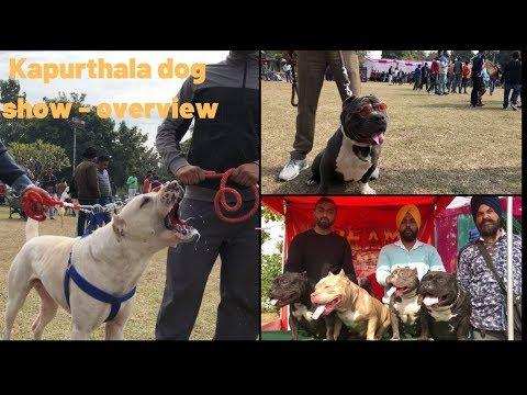 Kapurthala dog show - overview