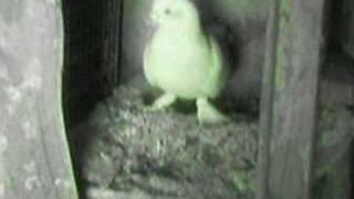hilvan kuşları