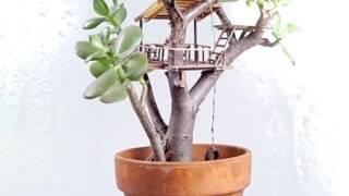 Домик на дереве. Вазонный вариант