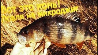 Ловля окуня на микроджиг! Рыба гнёт спиннинг!