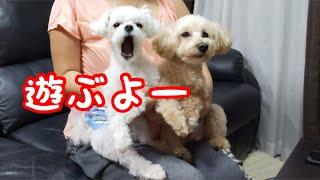 対照的な2匹の犬の性格が浮きぼり~~~