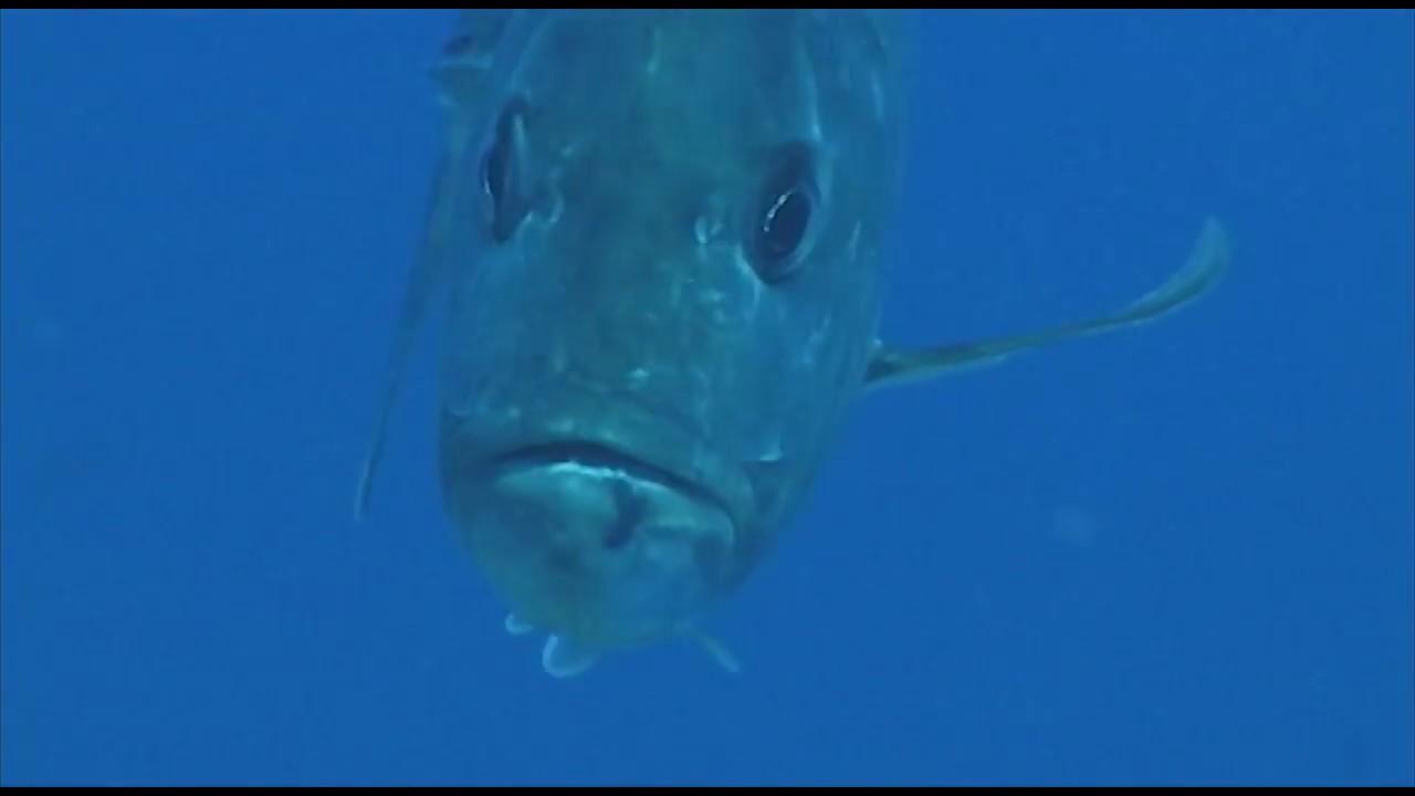 Scuba Diving Maui Hawaii