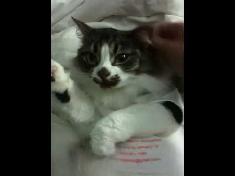Cutest. Cat. Ever - in a onesie!