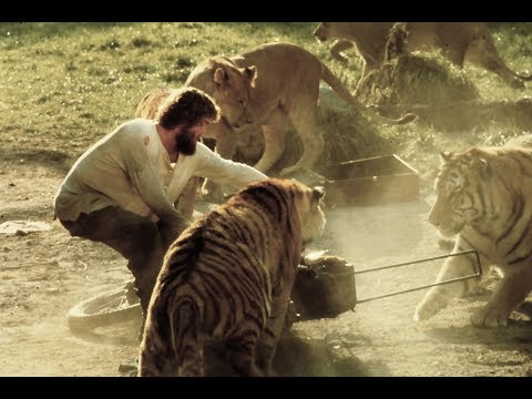 Roar: A Movie Made with 150 Untrained Lions and Tigers