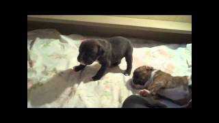 Tessa's Puppies Are 19 Days Old