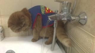 Кот, который не умеет пить / Thirsty cat