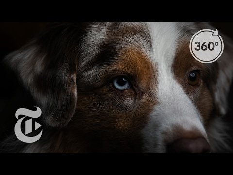 A Canine's View of the Westminster Dog Show | The Daily 360 | The New York Times