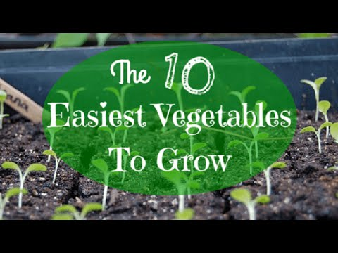 Beginner Gardening: The 10 Easiest Vegetables To Grow   YouTube
