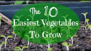 Beginner Gardening: The 10 Easiest Vegetables to Grow