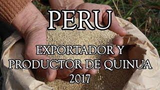 Perú Es El Primer Productor y Exportador De Quinua En El Mundo 2017