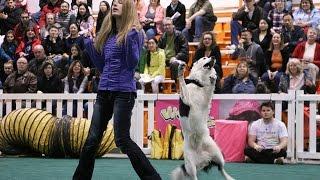 Toronto Canadian Pet Expo 2015!