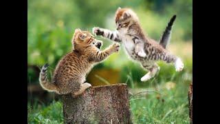 gatitos tiernos graciosos 2021 #1