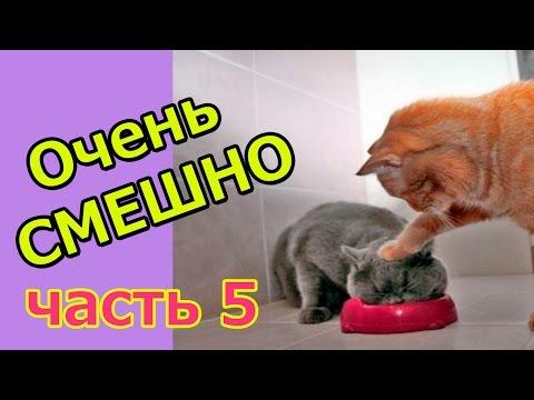 смотреть смешные видео про котят
