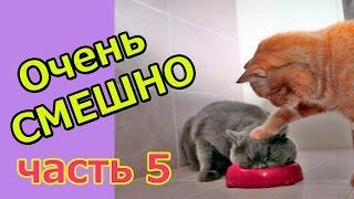 Смешные Котята видео про КОТЯТ приколы