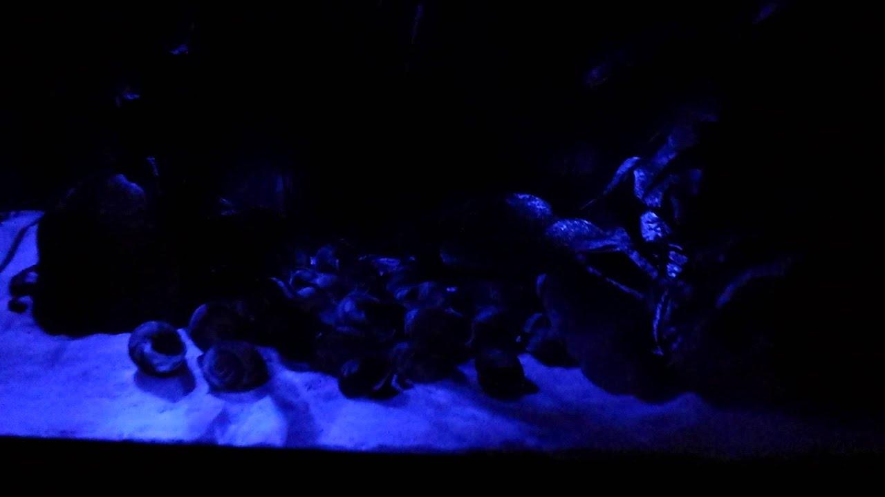 Plafoniere Led Per Acquari Marini Cinesi : Plafoniera led acquario 【 animali ottobre 】 clasf