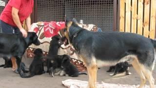 Команда «нельзя» и как щенка отучить кусаться | Урок 1 видеокурса «Растем вместе»