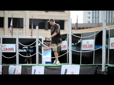 German Shorthaired Pointer Dock Jump