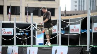 German Shorthaired Pointer Dock Jump