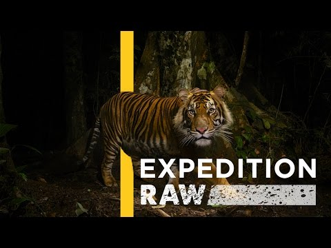 Tracking Tigers Is Just As Dangerous As It Sounds   Expedition Raw