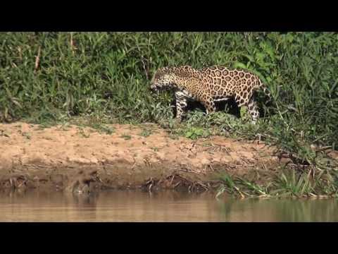 The Pantanal Safari 2016
