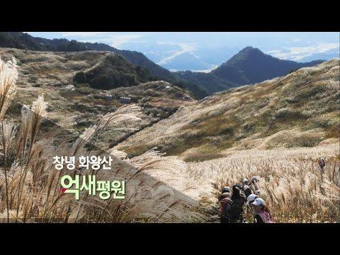 [경남100경 완전정복] 8경. 창녕 화왕산 억새평원 1부