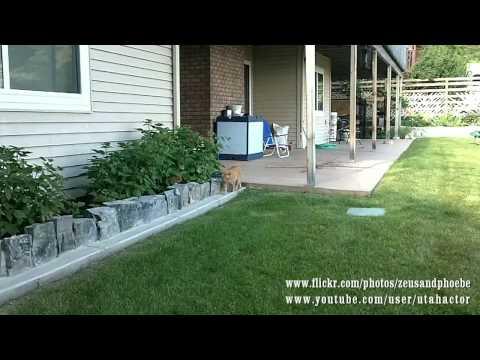 Slow Motion Ninja Cat Attack