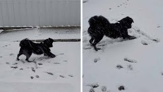 Dog Experiences Snow For The First Time