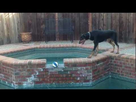 Dog Really Wants Ball and Doesnt Like Water