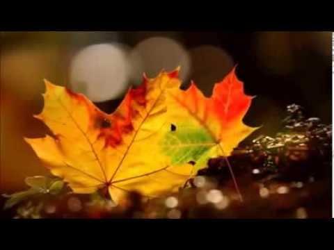 Осенние деньки (Е.Дога)