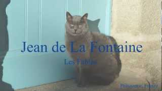 French Fable - La Cigale et la Fourmi by Jean de La Fontaine - Slow Reading