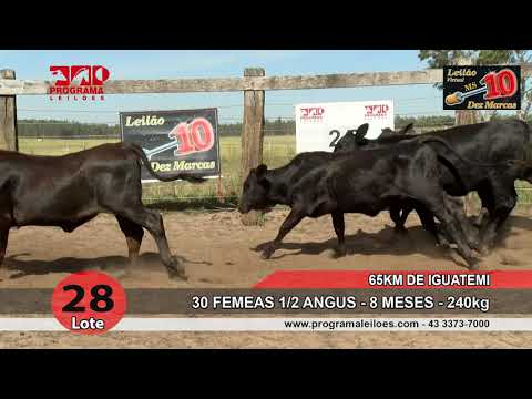 Lote 28