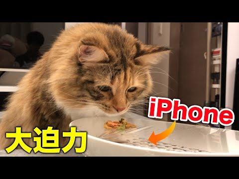 猫の食事を真下から撮ってたら新発見!
