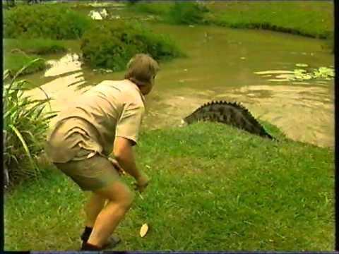 Steve Irwin feeding his crocs