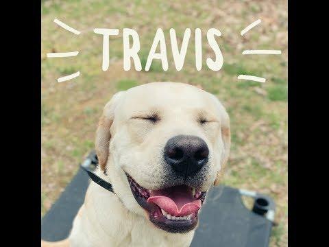 travis-labrador-retriever-owner-testimonial-|-hampton-roads-dog-trainers-|