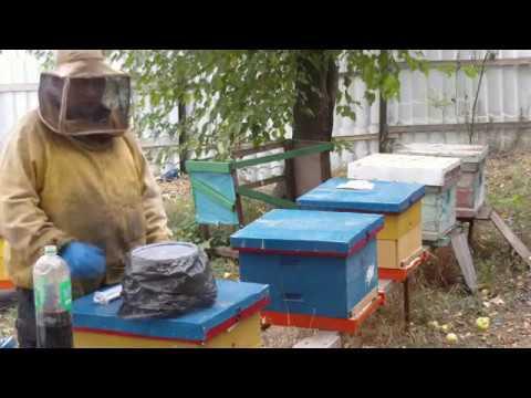 Обработка пчел бипином