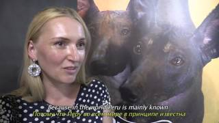 "ФИЛЬМ ""ПЕРУАНСКАЯ ГОЛАЯ СОБАКА"": WDS 2016 Москва/FILM: ""THE PERUVIAN HAIRLESS DOG: WDS 2016 MOSCOW"