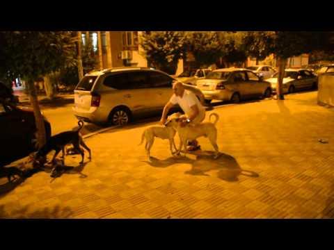 Me feeding egyptian street pets