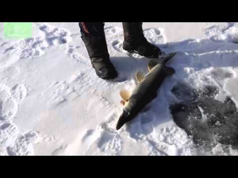 рыбалка на жерлицы в казахстане