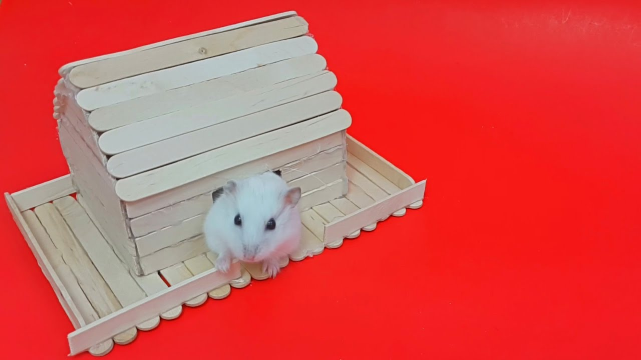 How to make a house for a hamster