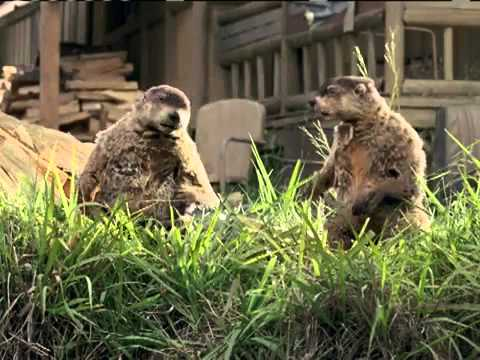 Woodchucks GEICO Commercial - YouTube