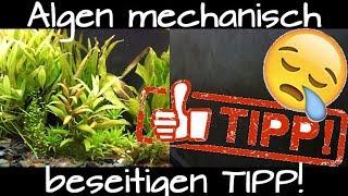 Algen zu 100% im Aquarium beseitigen | was wirklich hilft! | Tipp