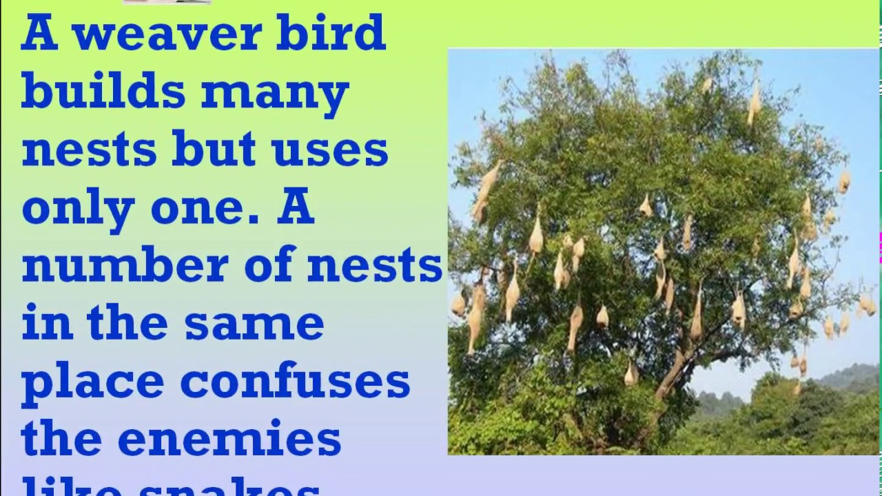 Birds and their nests Part 3 Class 3 Science Exercise Essay & Objective  Type Questions