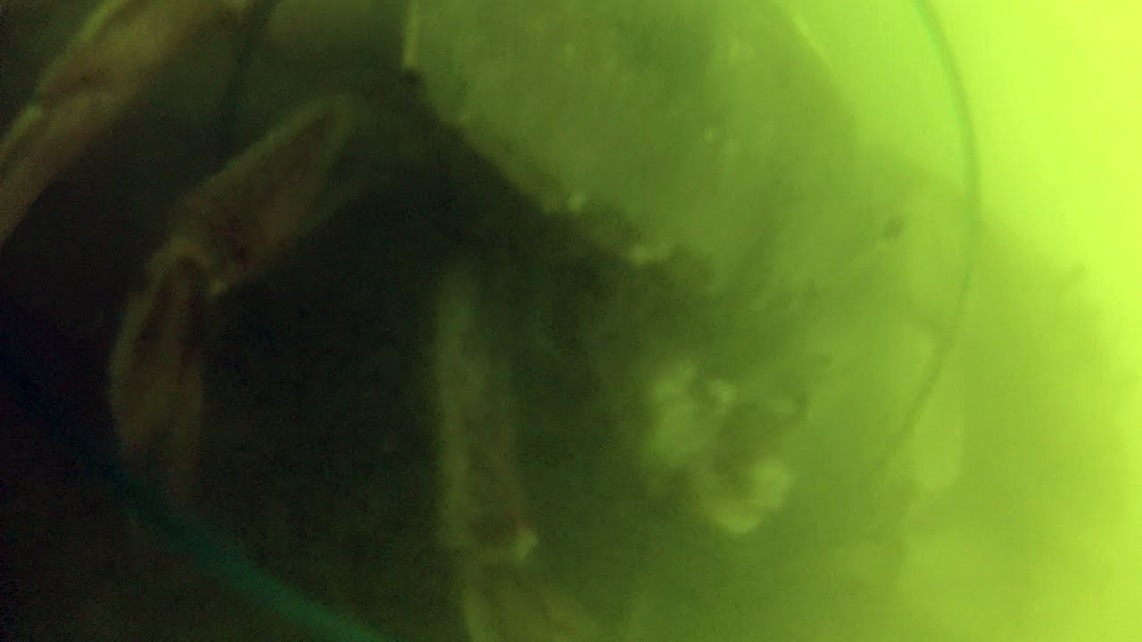 Underwater crab snaring footage what really happens in for Pacifica pier fishing report