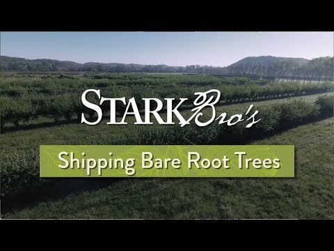 Shipping Bare-Root Trees