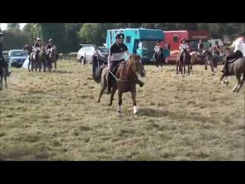 2014 Northern Ireland Championships - Bedfordshire Juniors