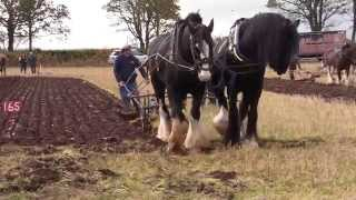 Ploughing with horses @ Scottish Ploughing Championships 2014