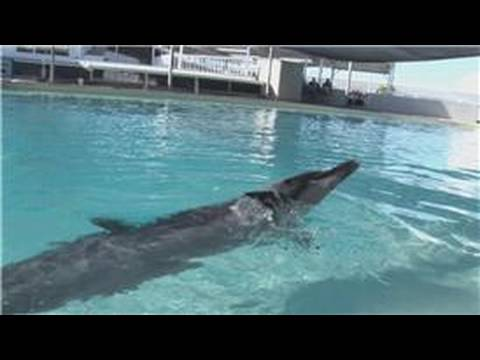 Dolphin Facts : What Kinds Of Tricks Can Dolphins Do?