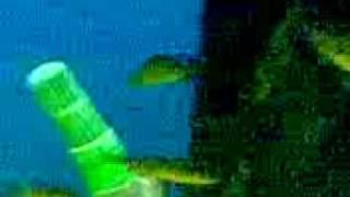 Fischkopf Zajak das größte Zoogeschäft der Welt